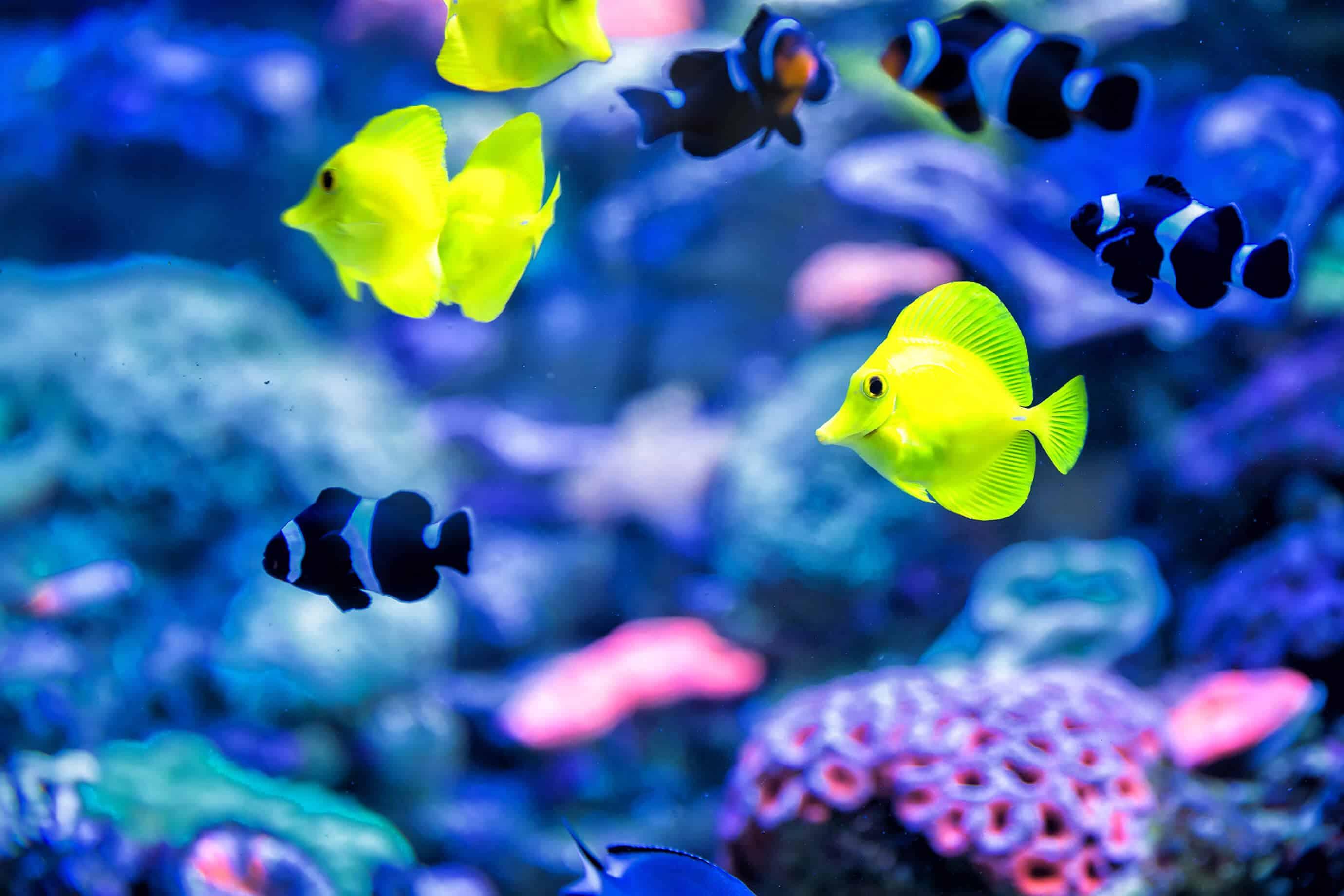 Maintain an Existing Aquarium