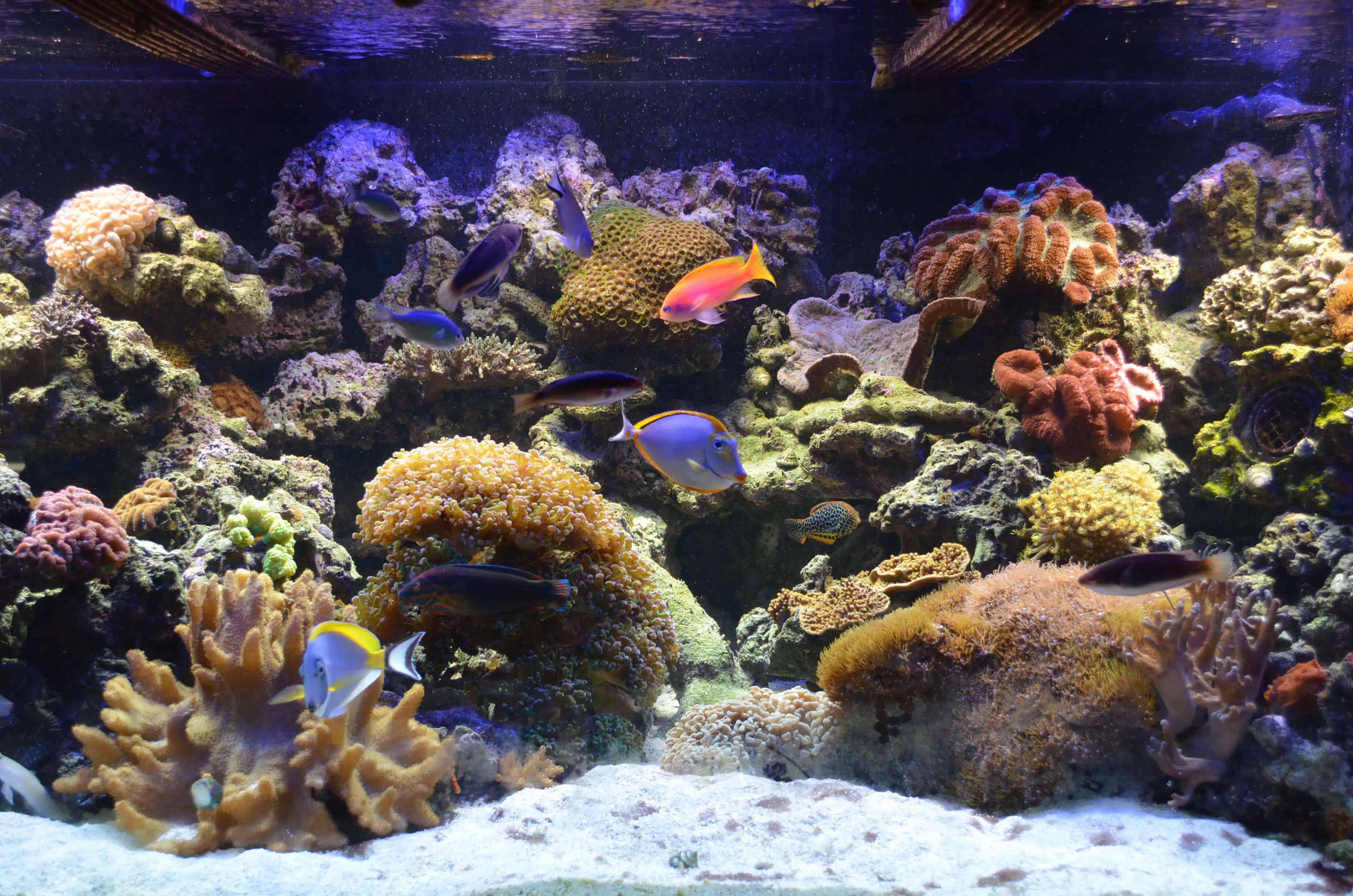 Custom Aquarium Design and Installation