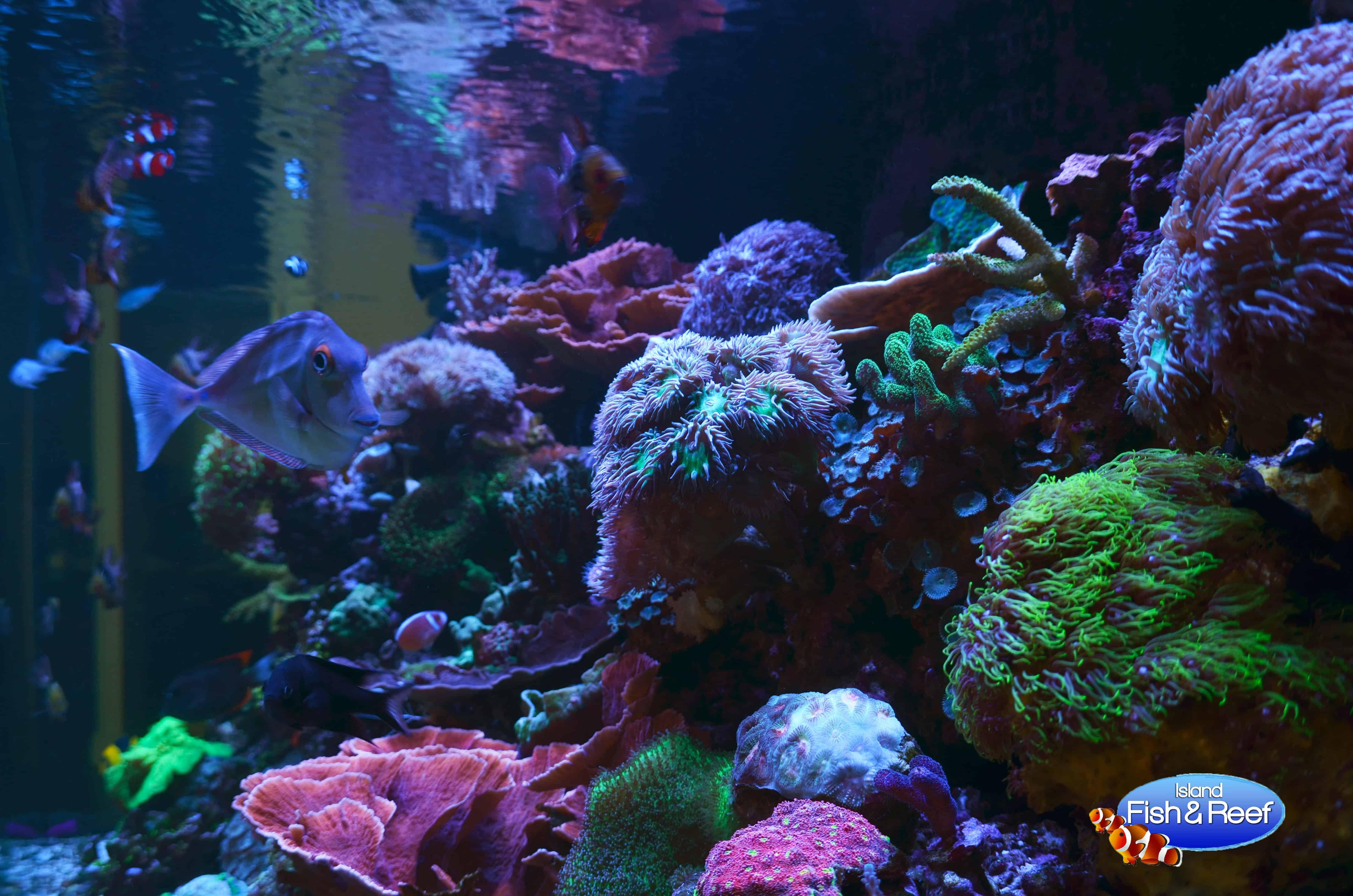 long island aquarium cleaning