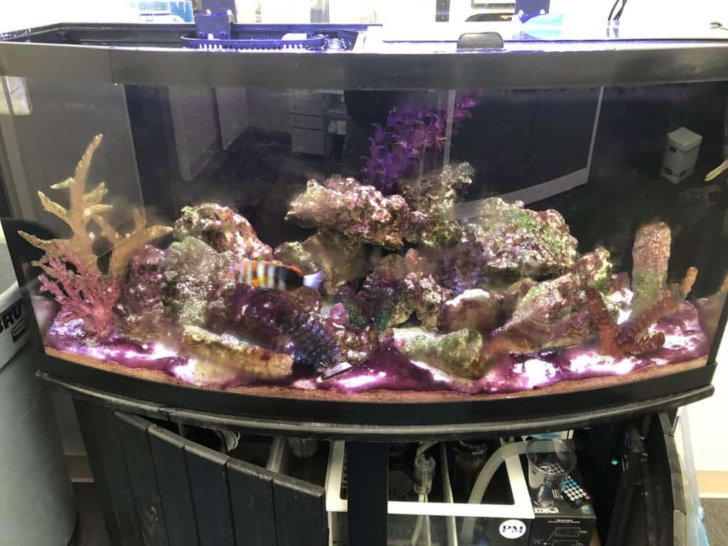 long island aquarium maintenance